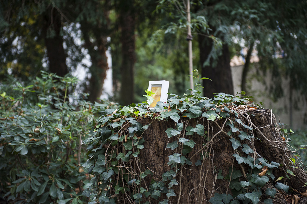 quadro abbandonato su un ceppo con edera