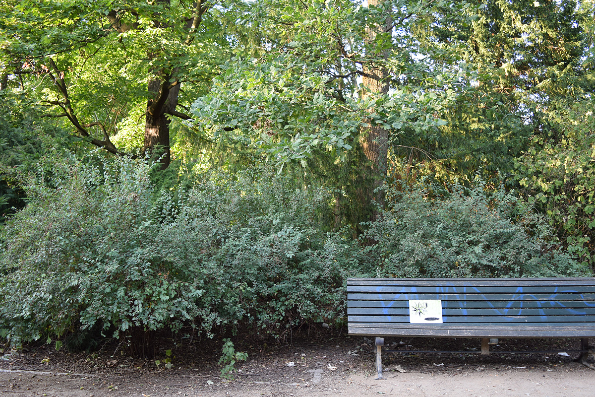 Una linoleografia di Stefania Bressani è abbandonata su una panchina del parco di tiertgarten a Berlino