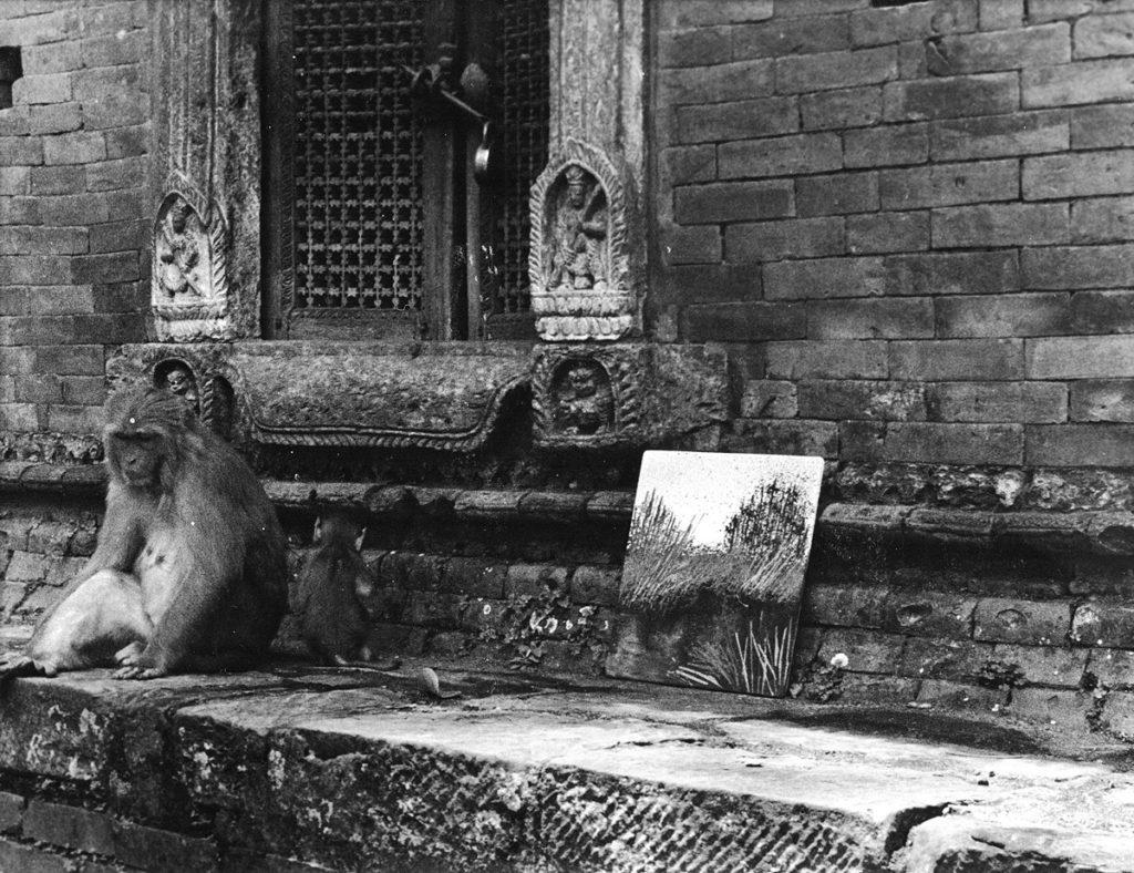 una scimmia seduta accanto ad un quadro